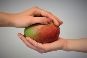 Mango logo foto 2018